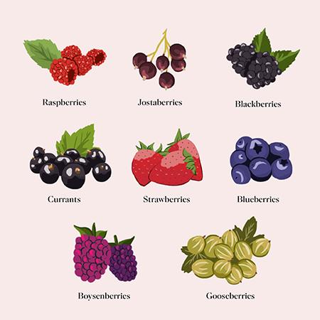 ăn berries tăng chiều cao tuổi dậy thì